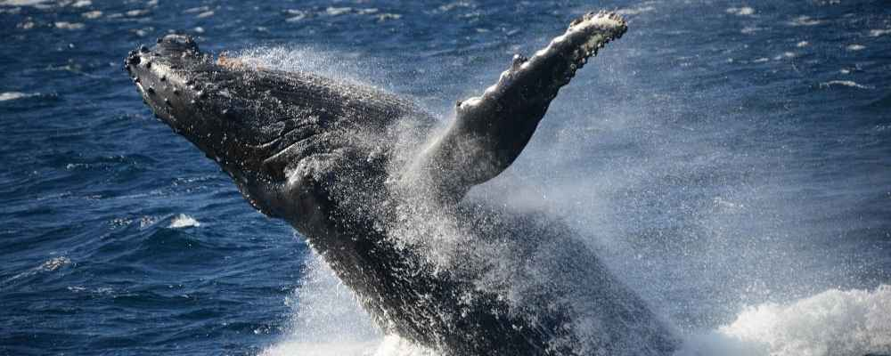 Jervis Bay Whale Watching Tours
