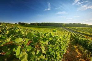 Wine region Barossa Valley